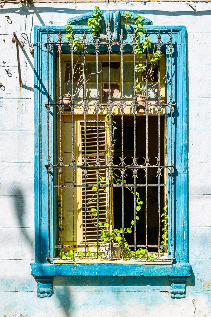 cuba_window_vine.jpg