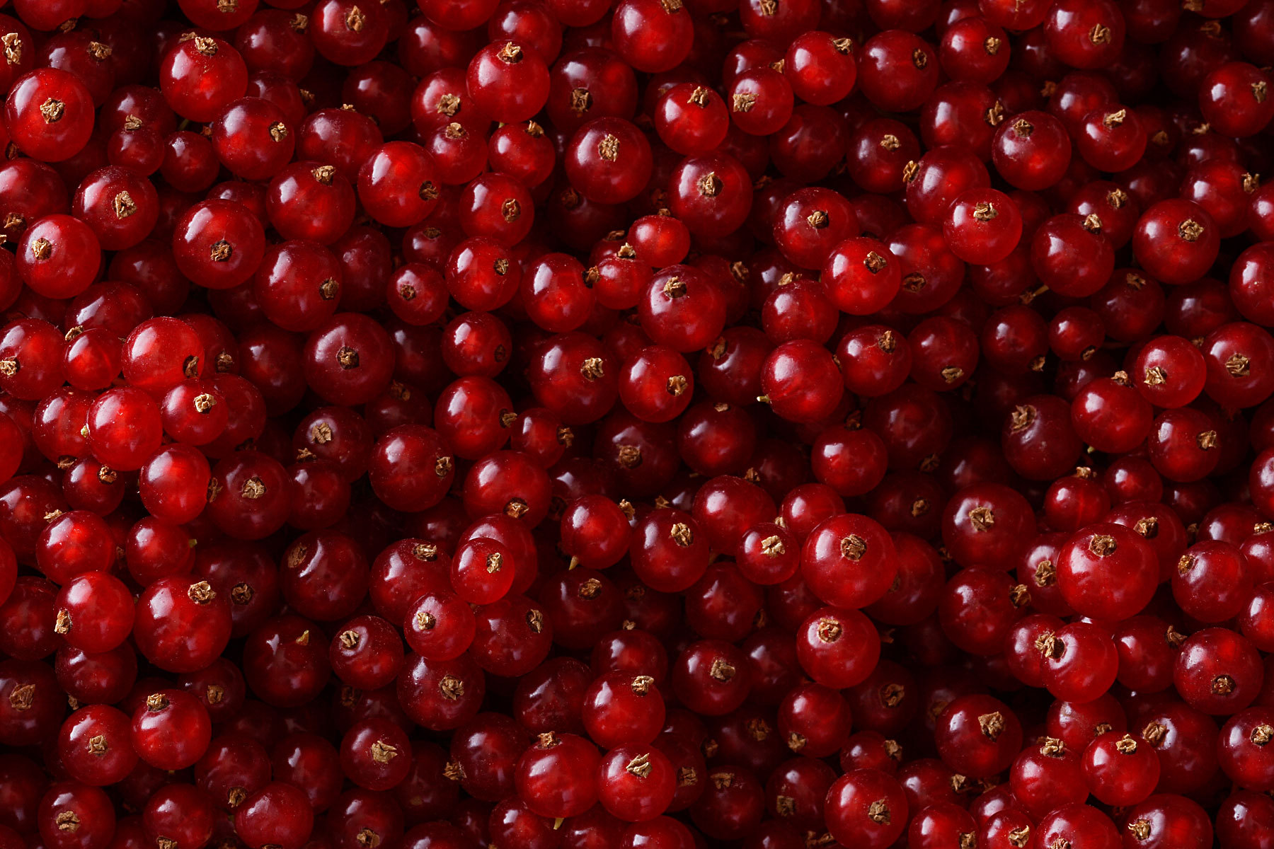 Currants Red
