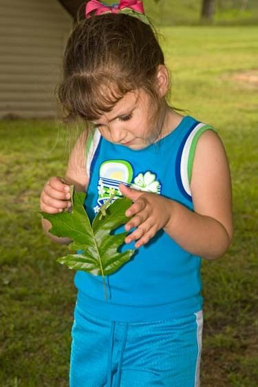 Young female child studies leaf outdoors