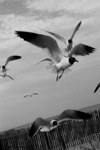 Pigeon Patrol