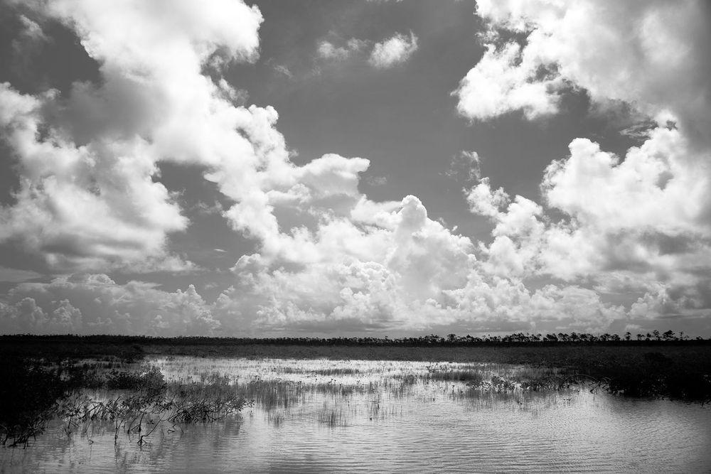 1andros_island_mangroves_bonefish.jpg