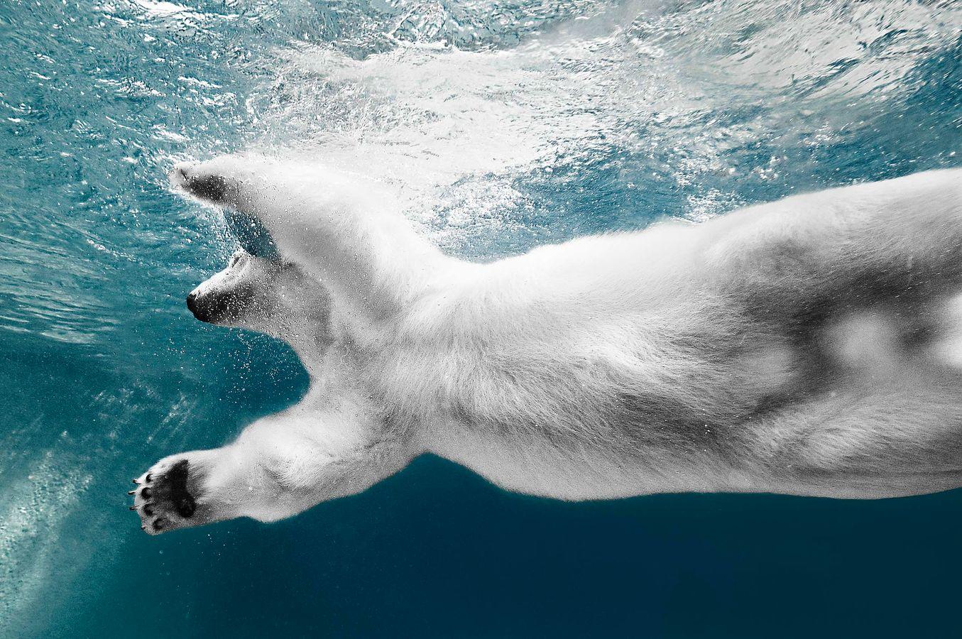 Coldilocks Floats Just Below the Water.jpg