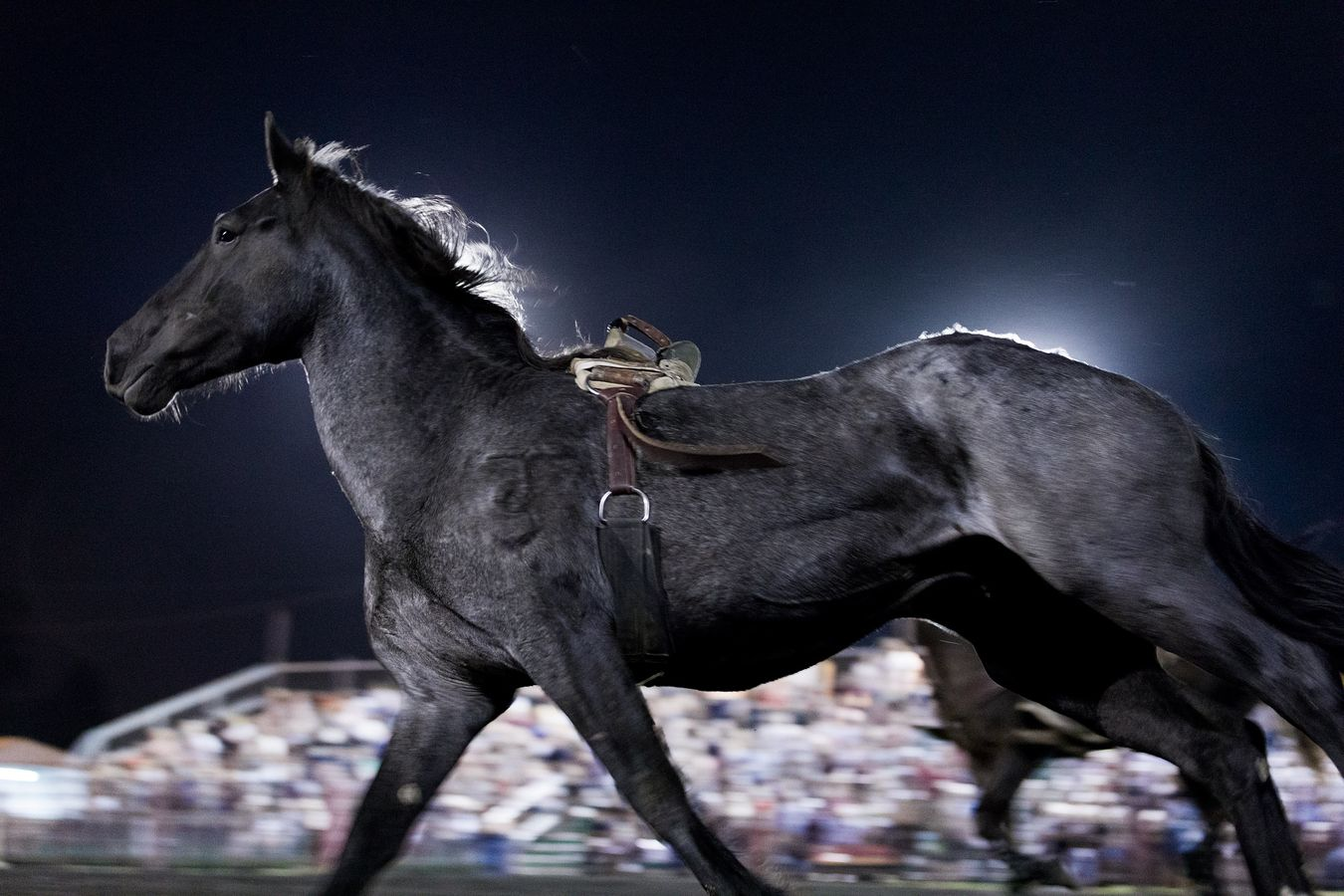 mconfer_Pro_Rodeo-0130-lb.jpg