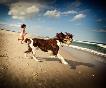 Lifestyle Image- Dog and Toddler Running on Beach.jpg