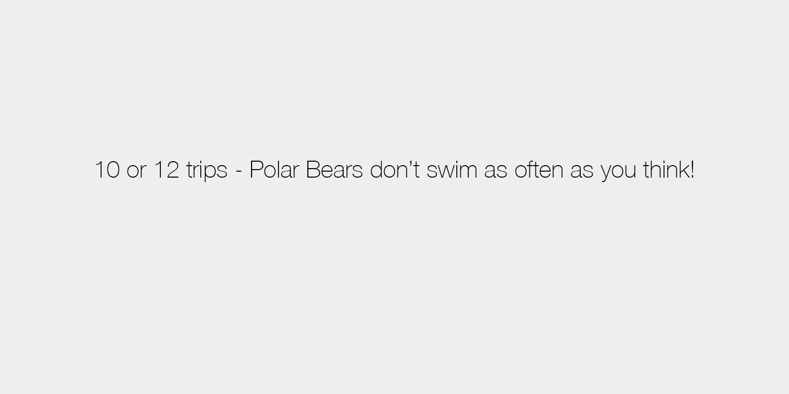 2017 Mconfer Polar Bear Answer 02.jpg