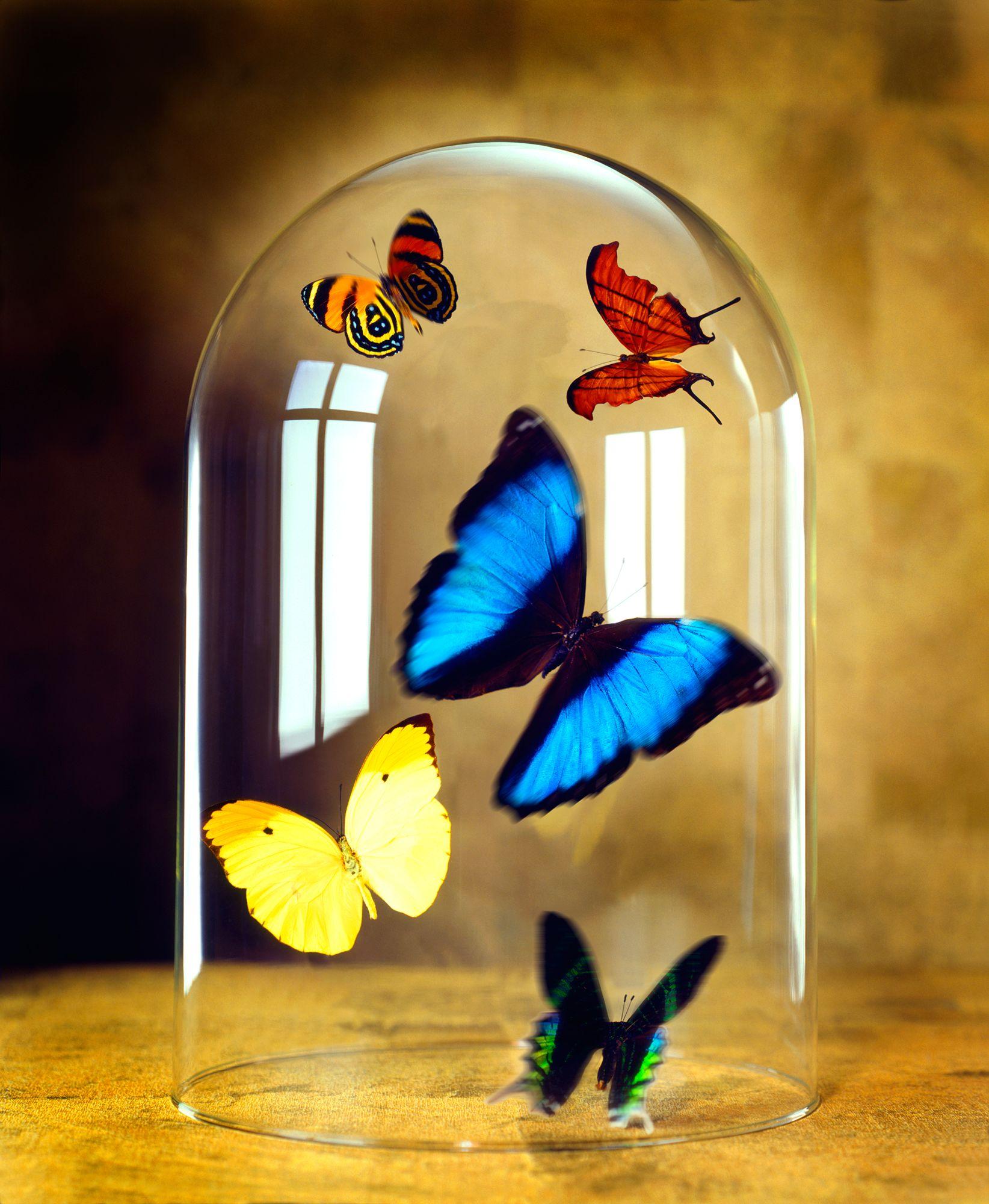 butterfly-motion.jpg