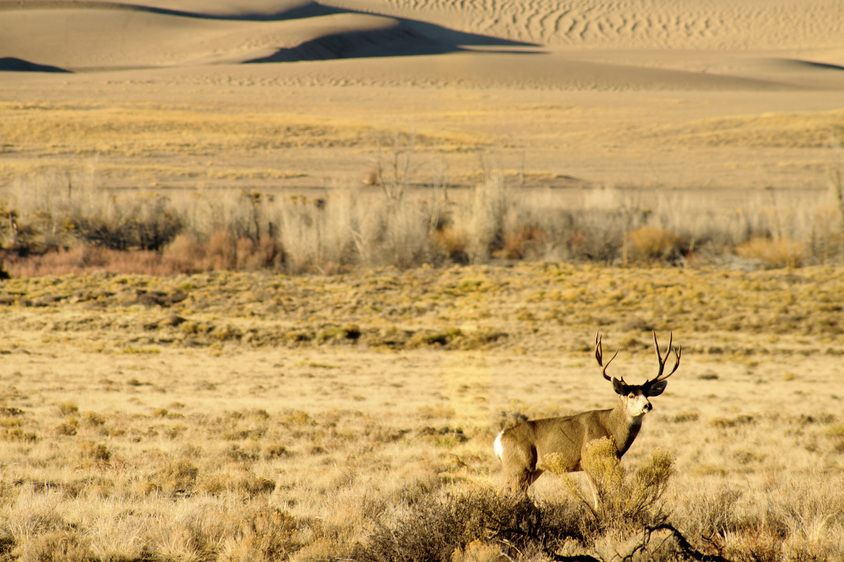 1r20101227_Sand_Dunes_DHF_5652