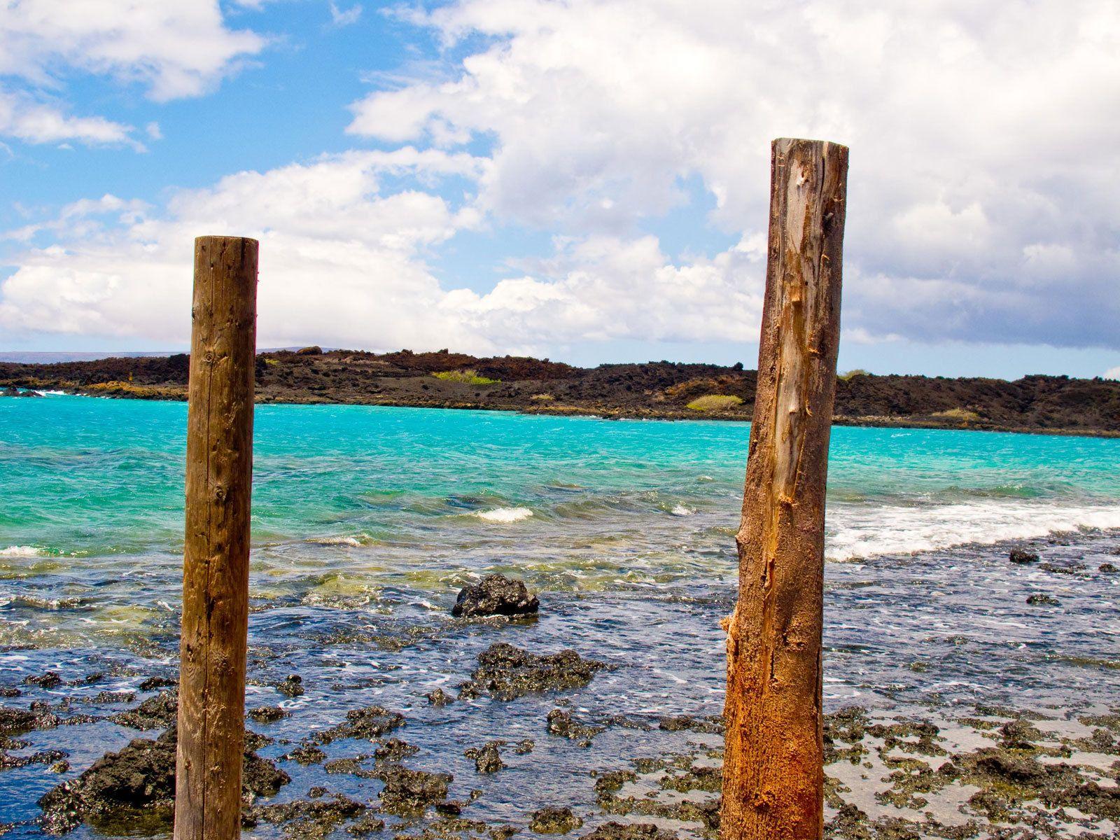 5_0_71_1img_3584_hawaiiunderwater_2010_007.jpg
