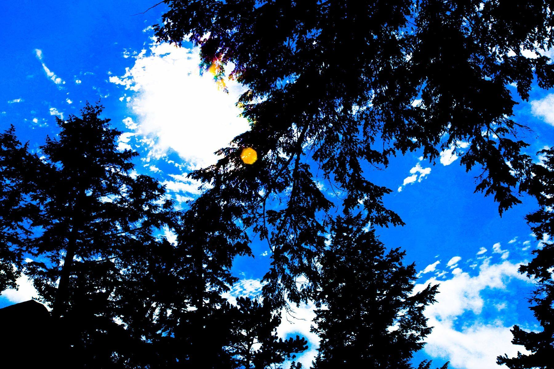 Blue Forest and the Sun