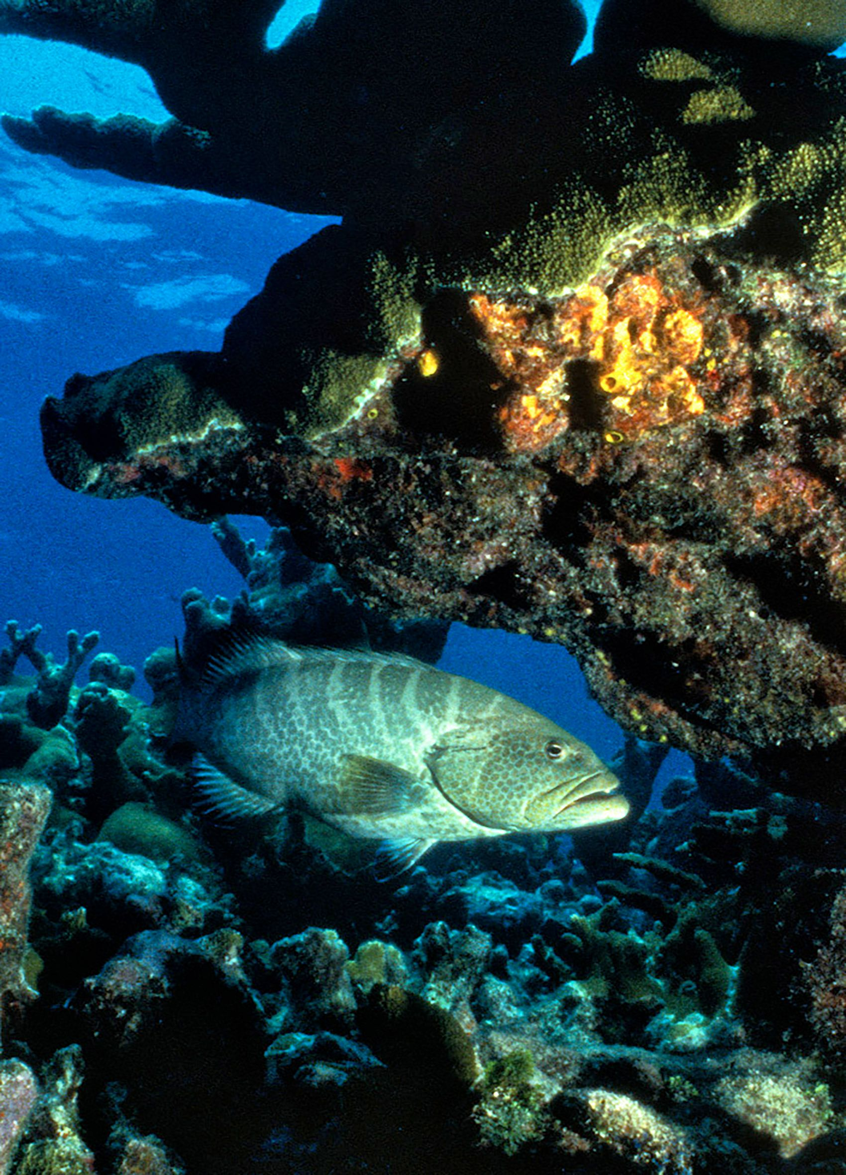 Marine Life 0005.jpg