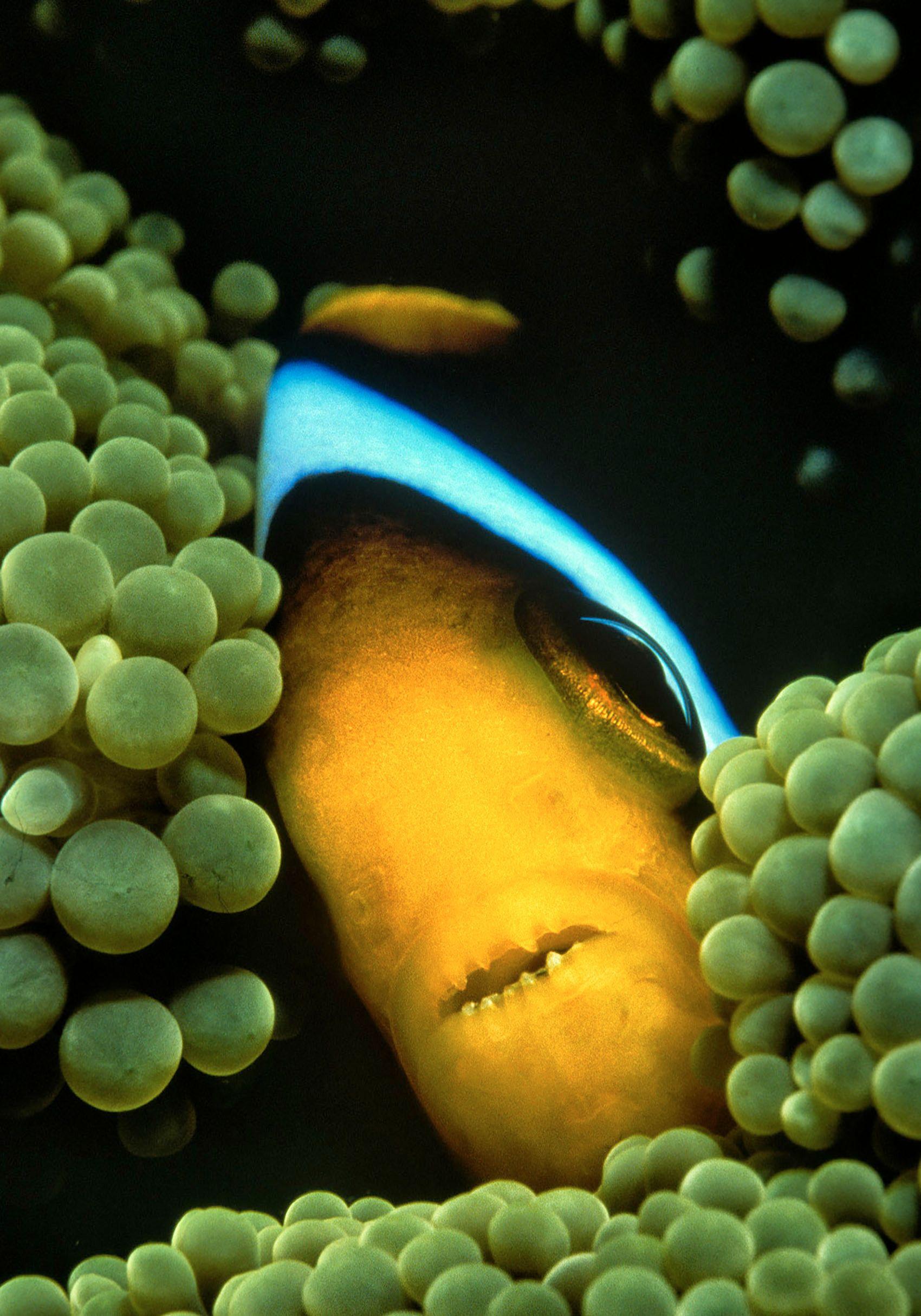 Marine Life 0056.jpg