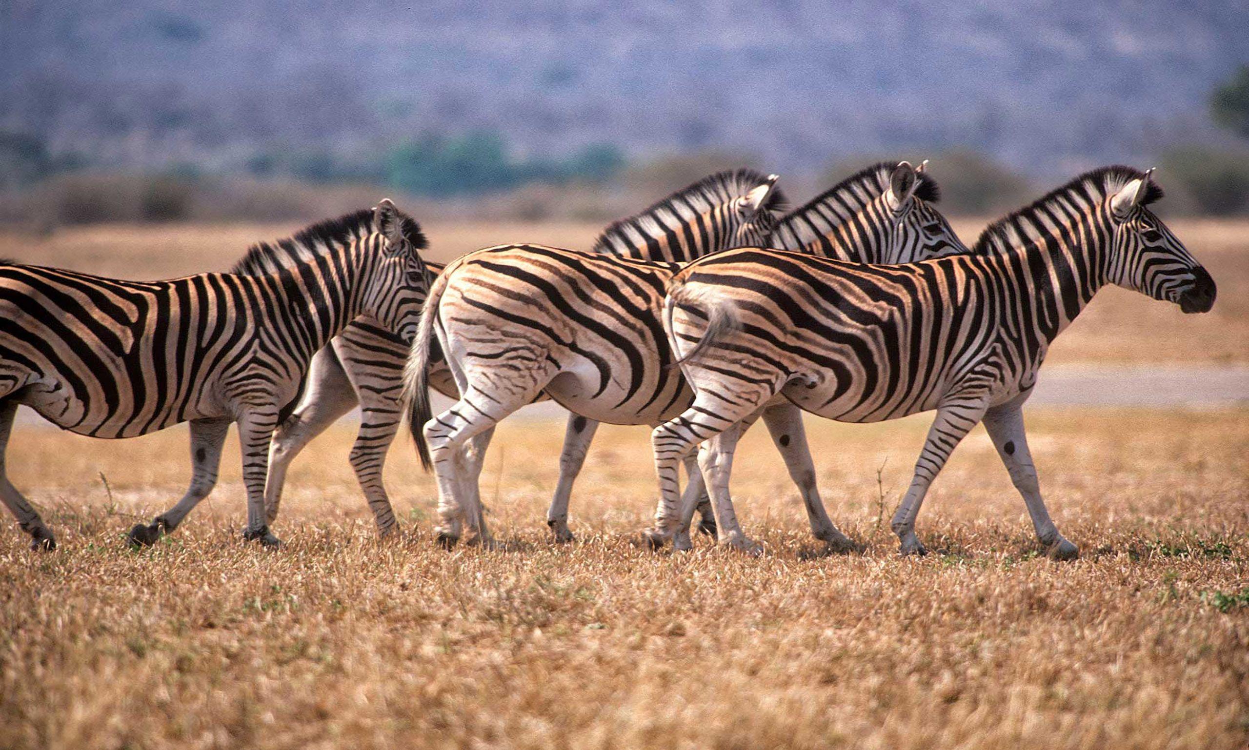 african-animals-0001_opt.jpg