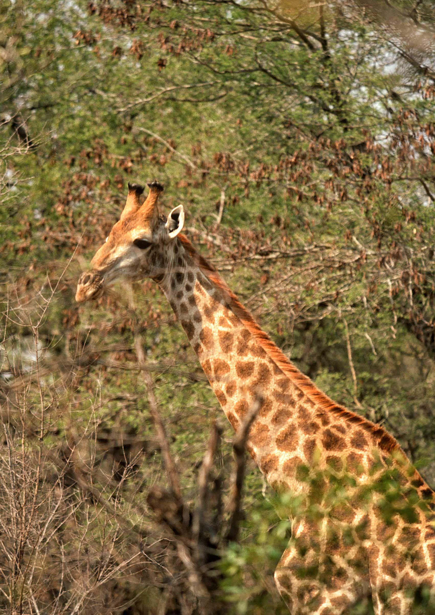 african-animals-0118_opt.jpg