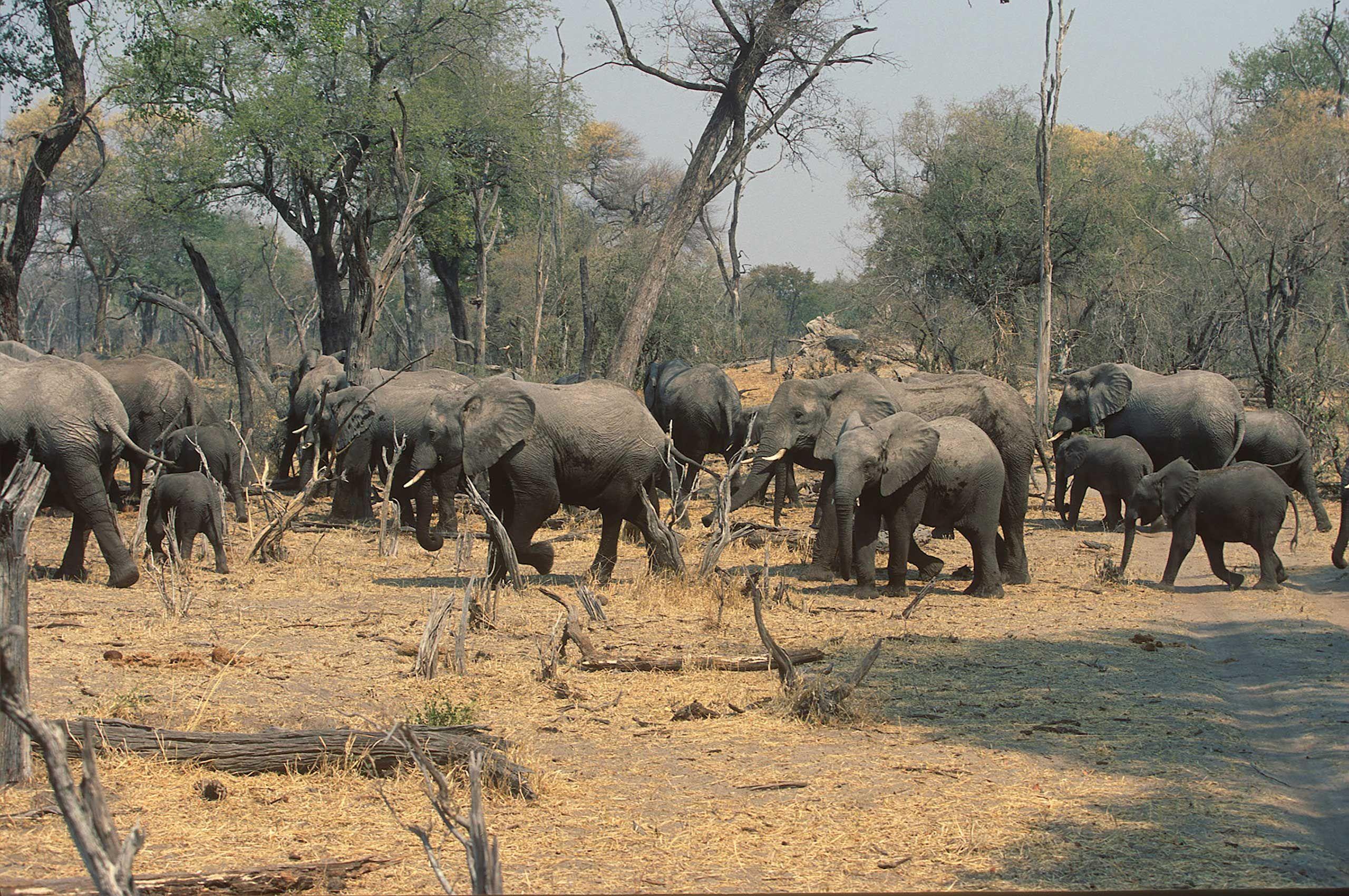 african-animals-0036_opt.jpg