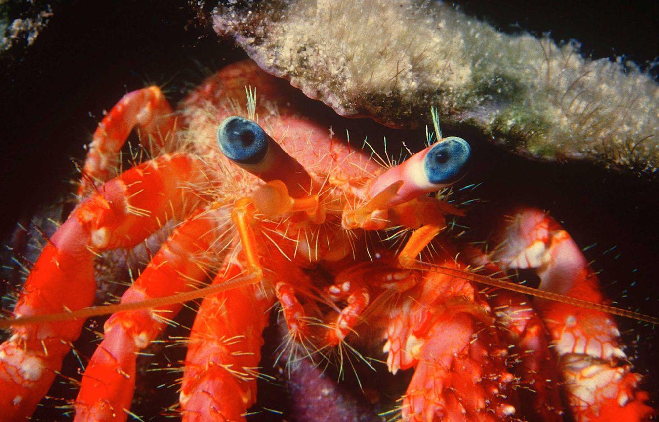 Marine-Life-0065_opt.jpg