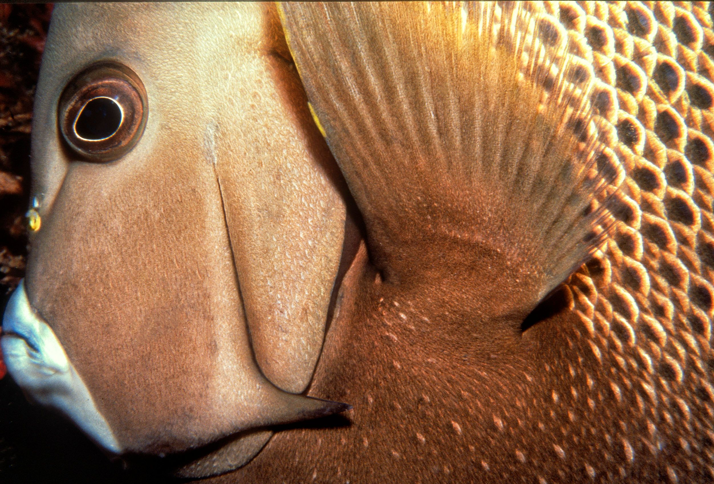 Marine Life 0048.jpg