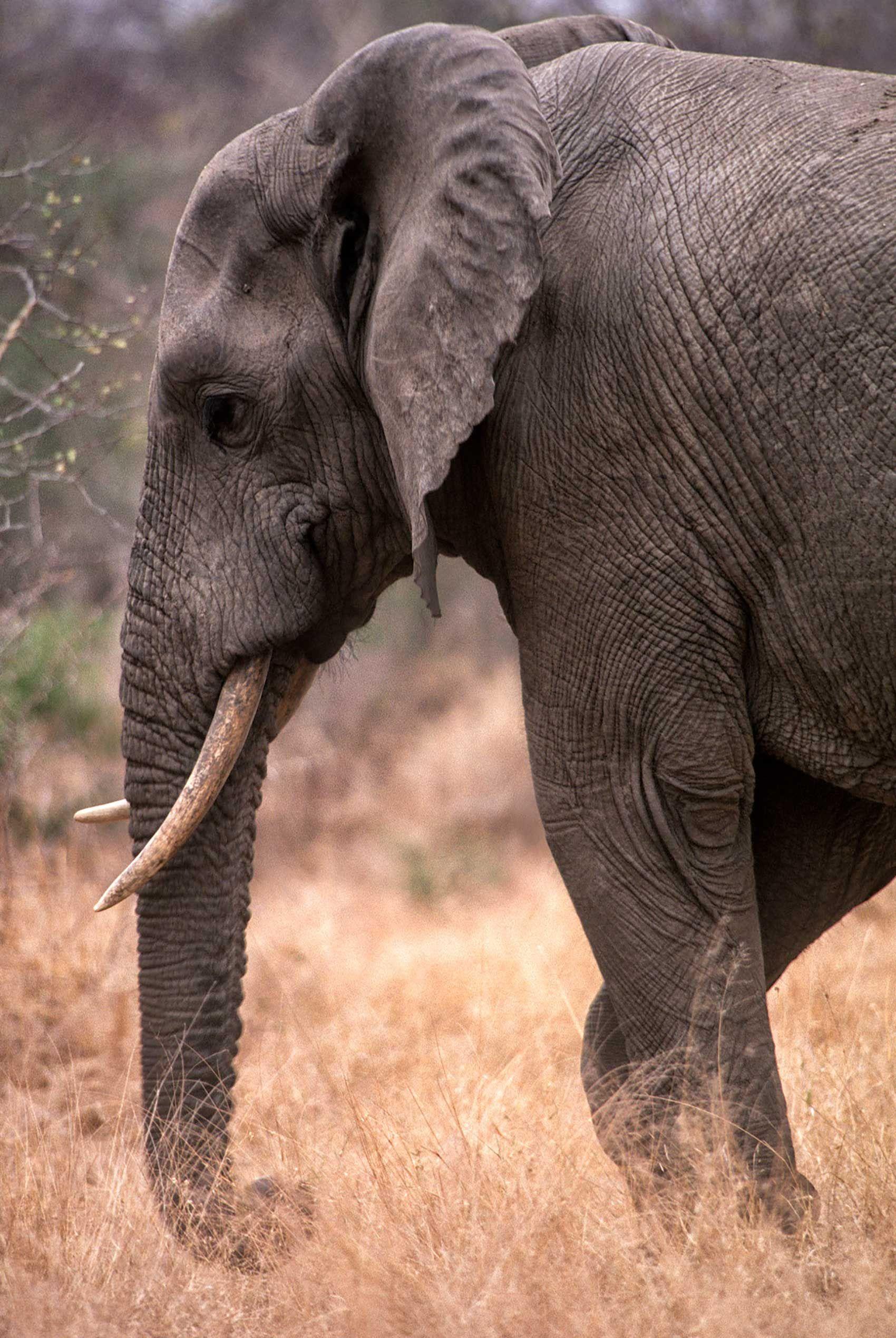 african-animals-0017_opt.jpg