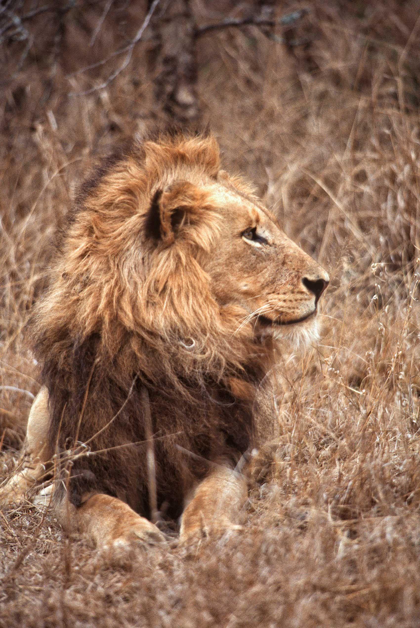 african-animals-0003_opt.jpg