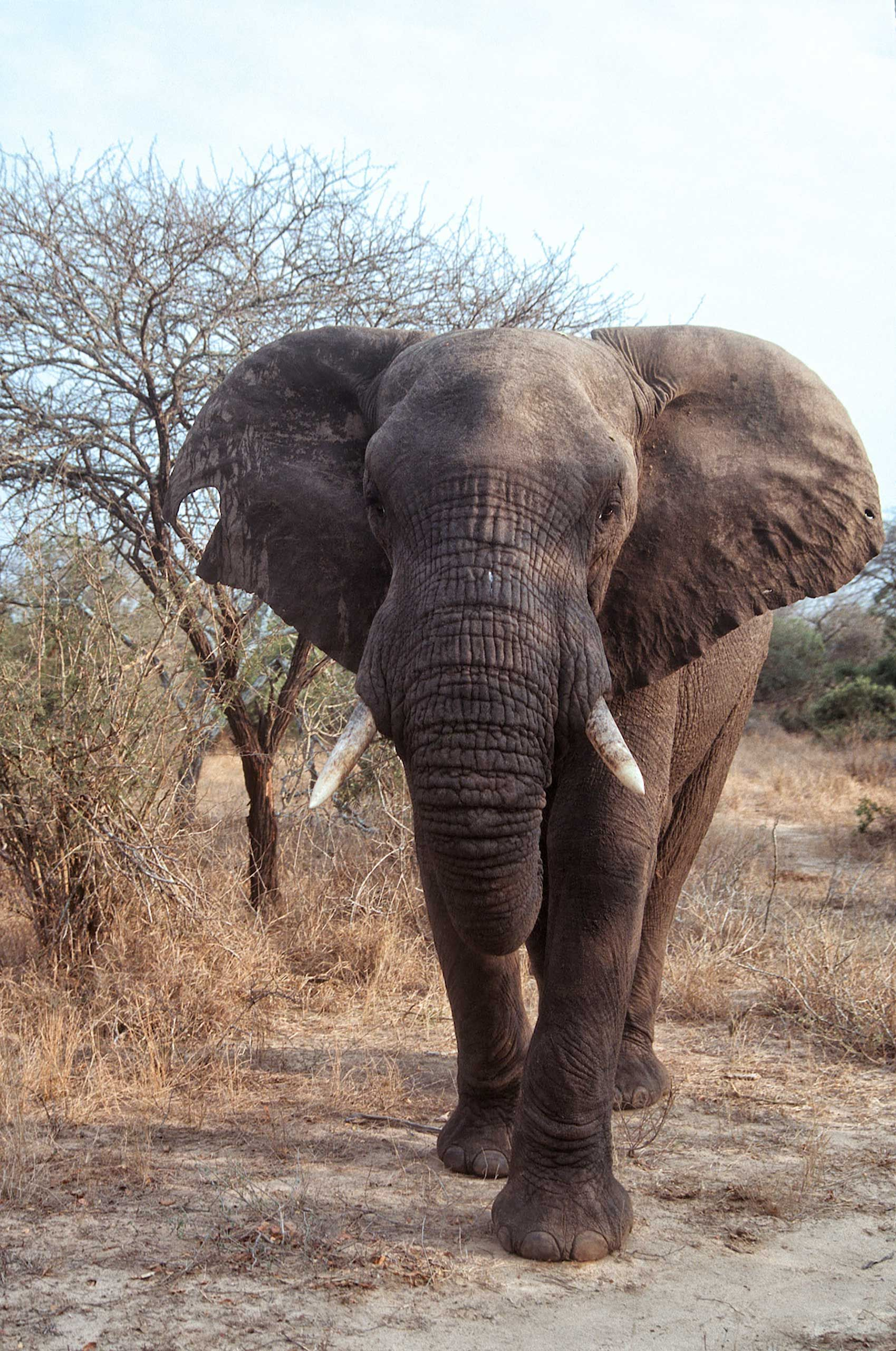 african-animals-0004_opt.jpg