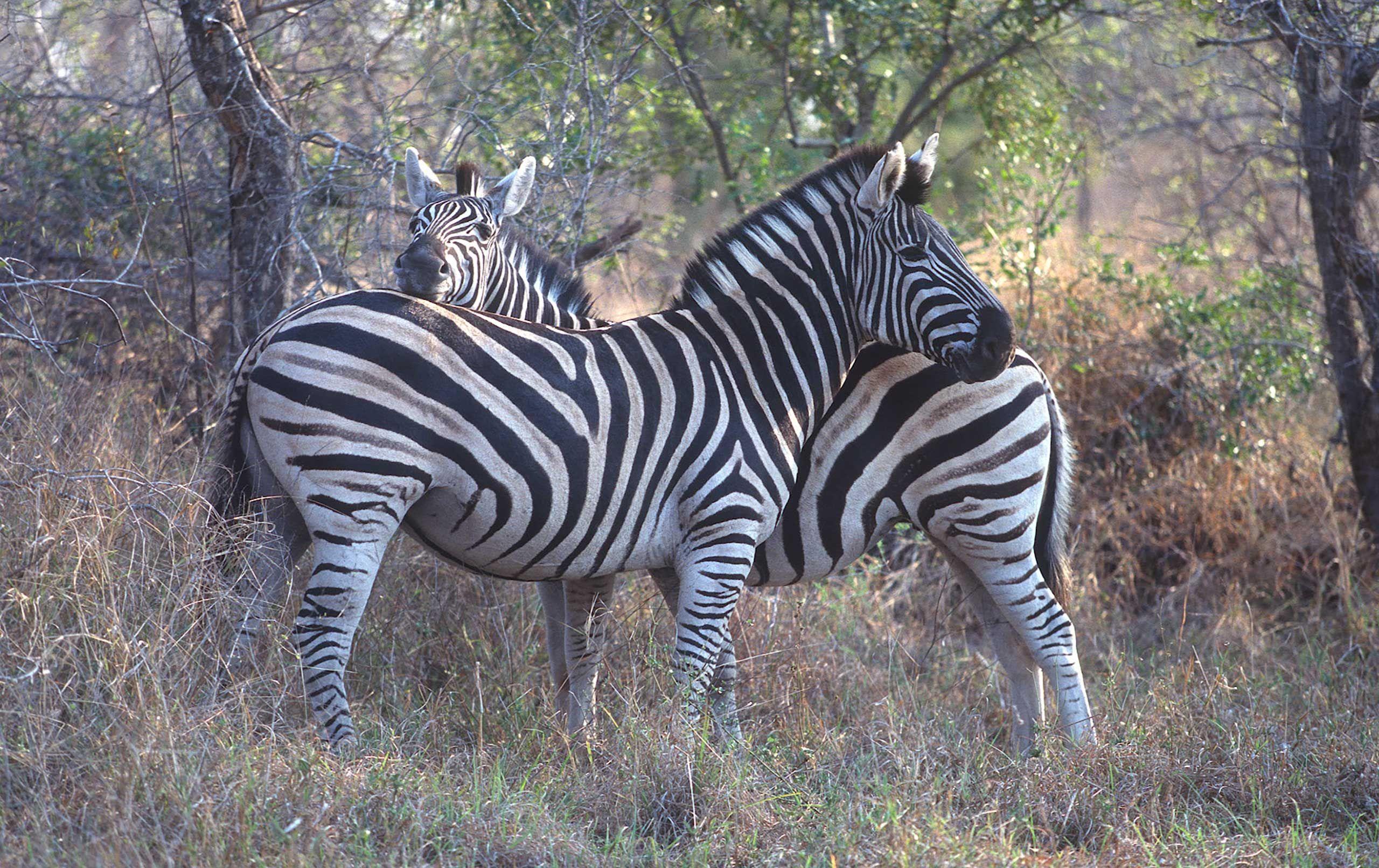 african-animals-0060_opt.jpg