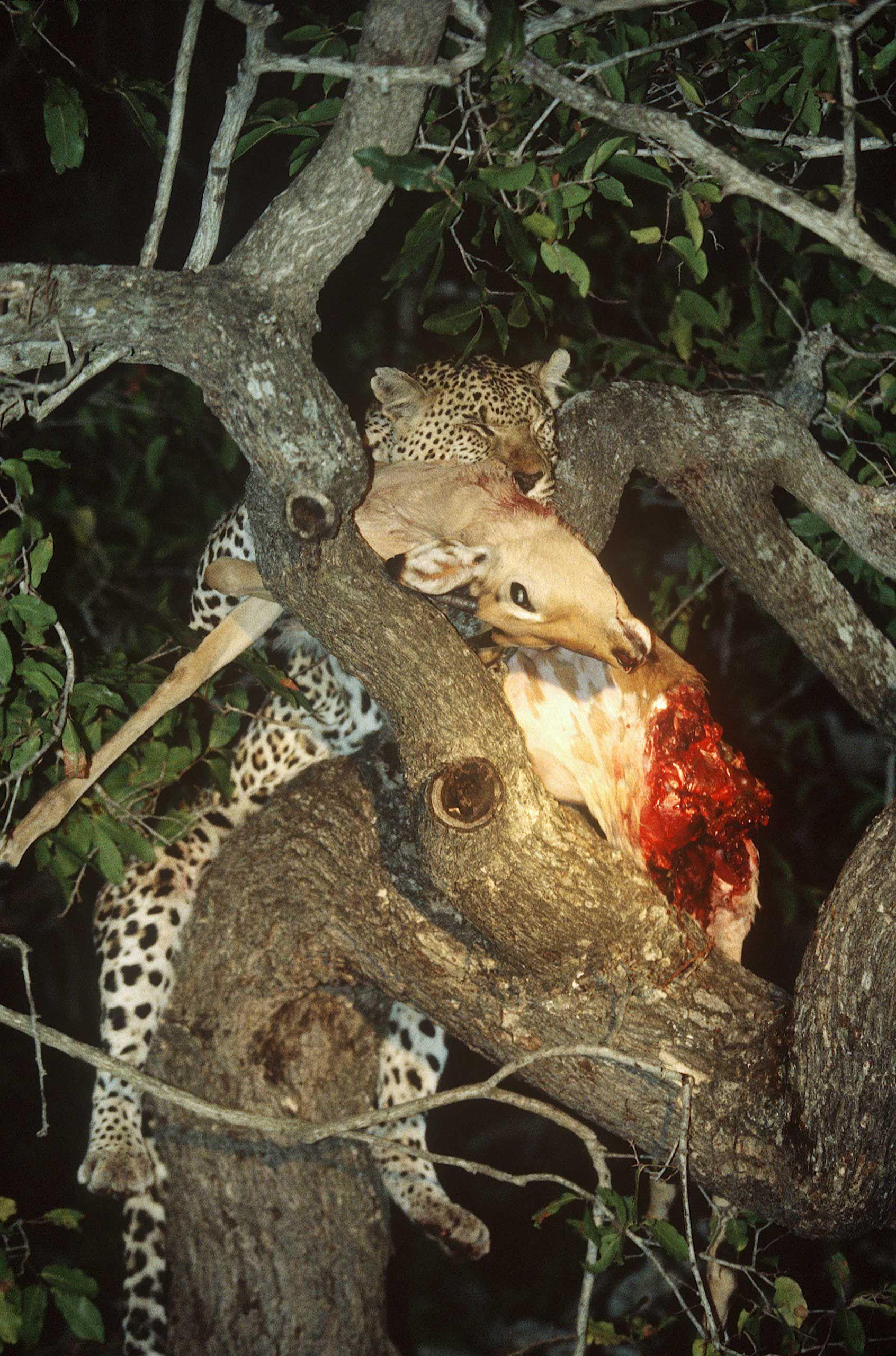 african-animals-0002_opt.jpg