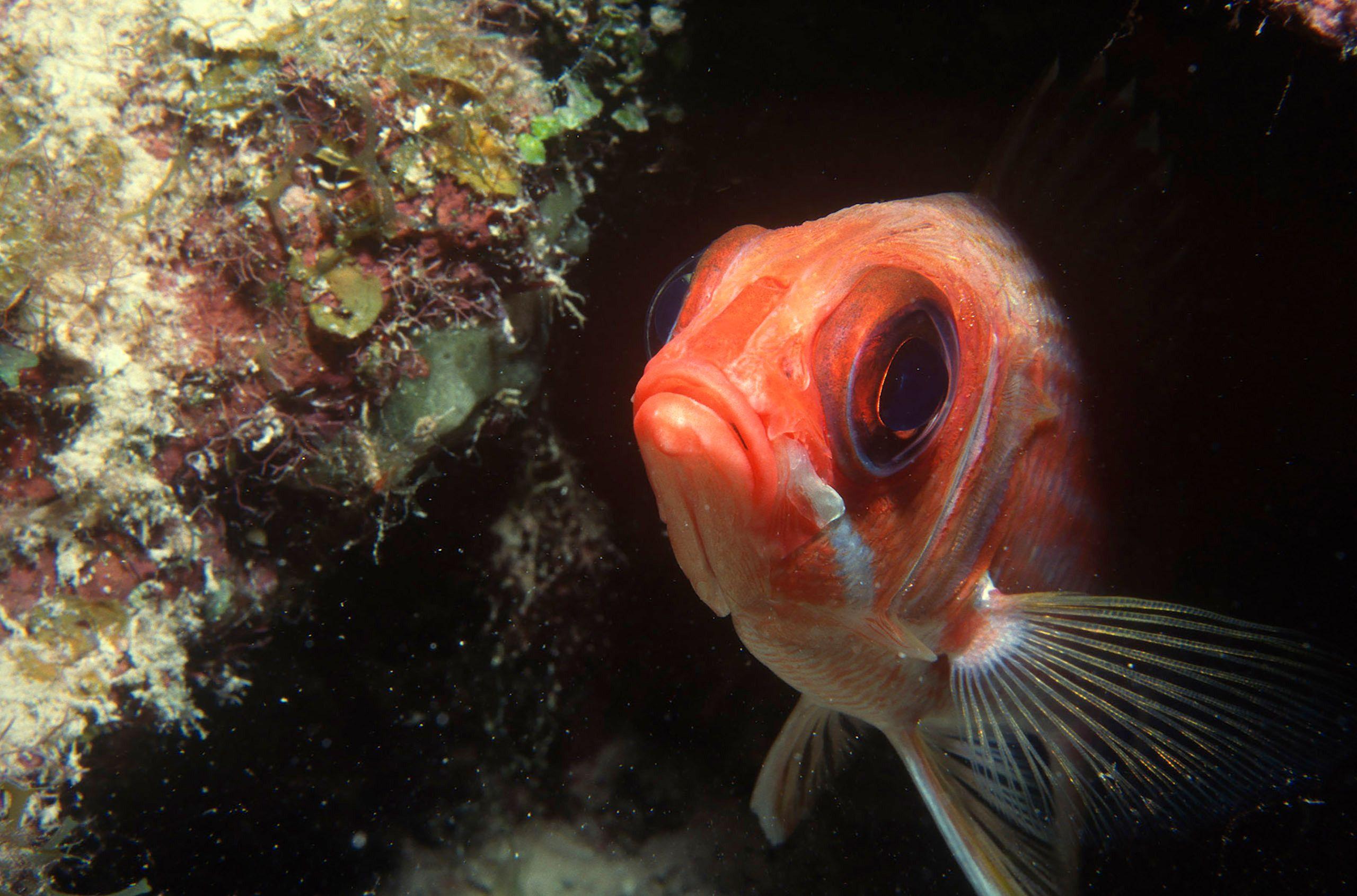 Marine Life 0012.jpg