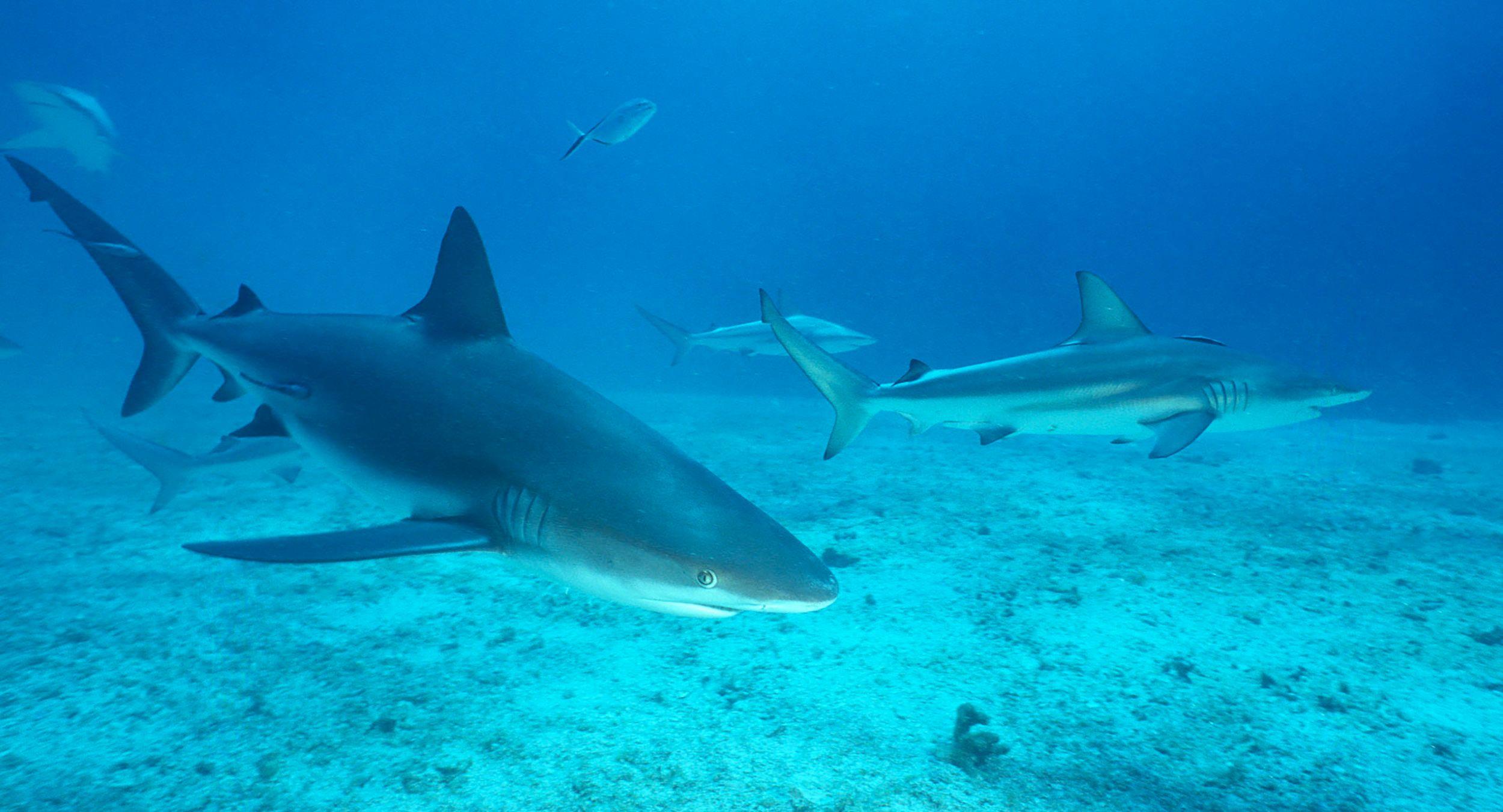 Marine Life 0040.jpg