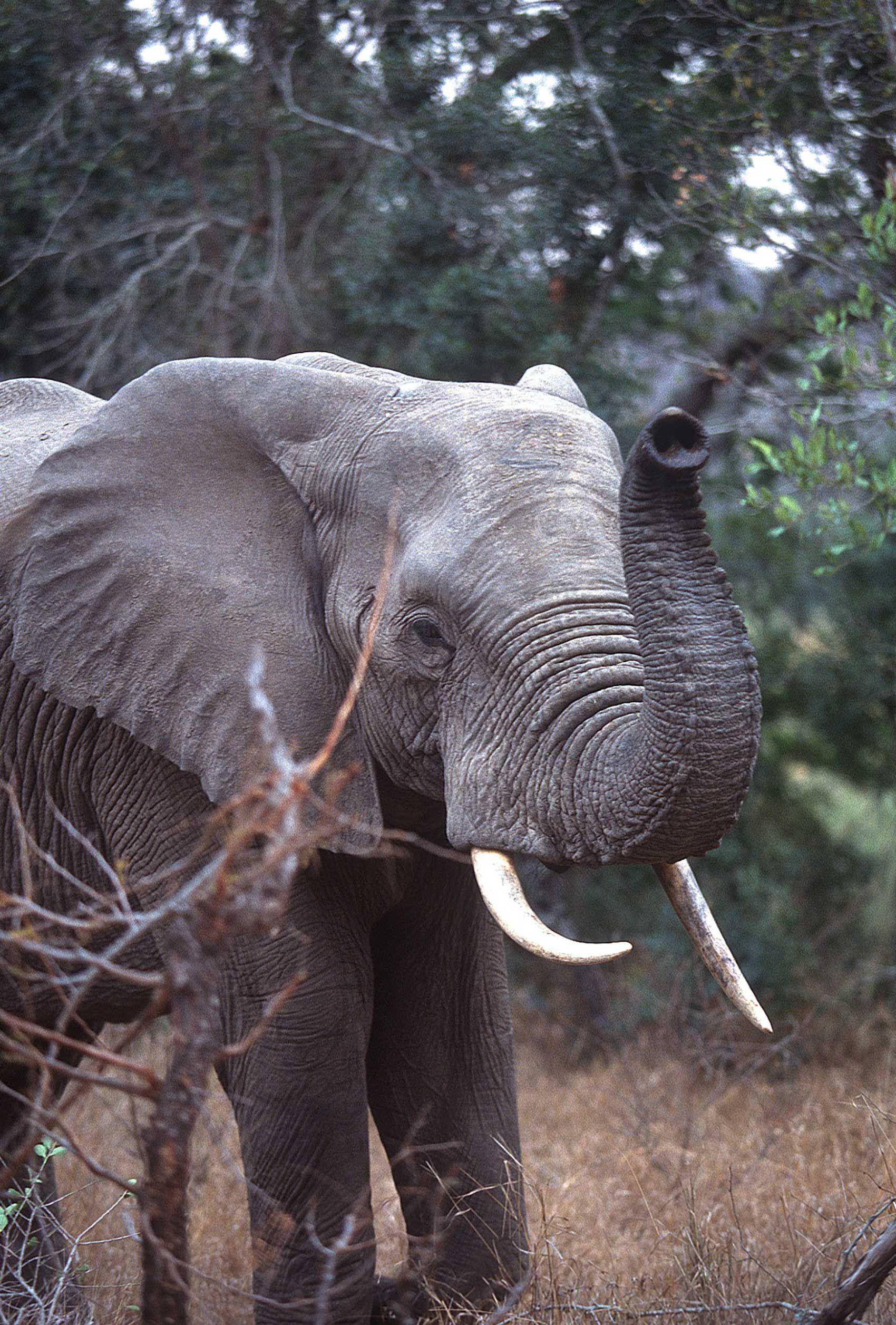 african-animals-0040_opt.jpg