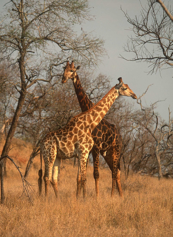 african-animals-0022_opt.jpg