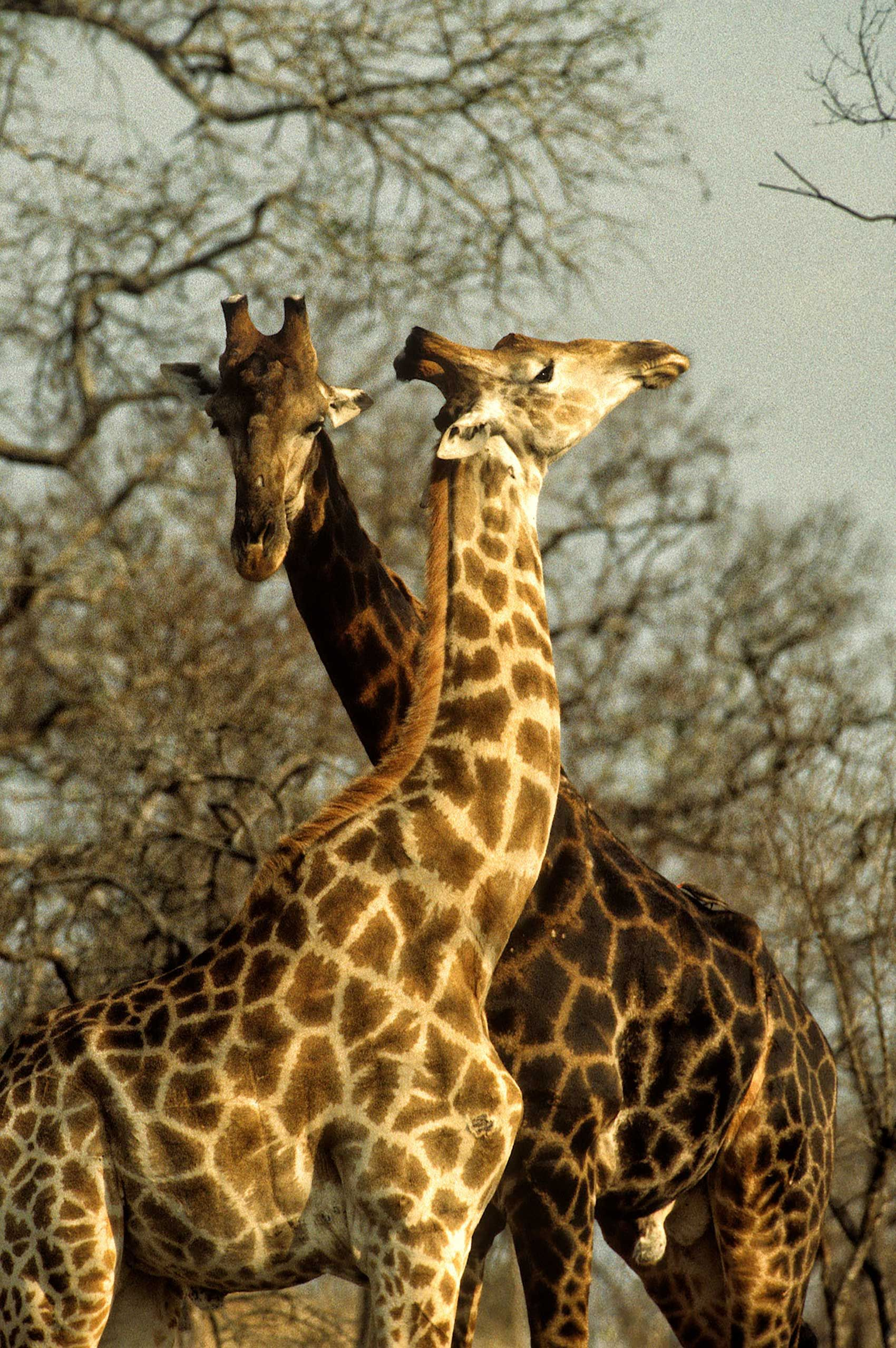 african-animals-0019_opt.jpg