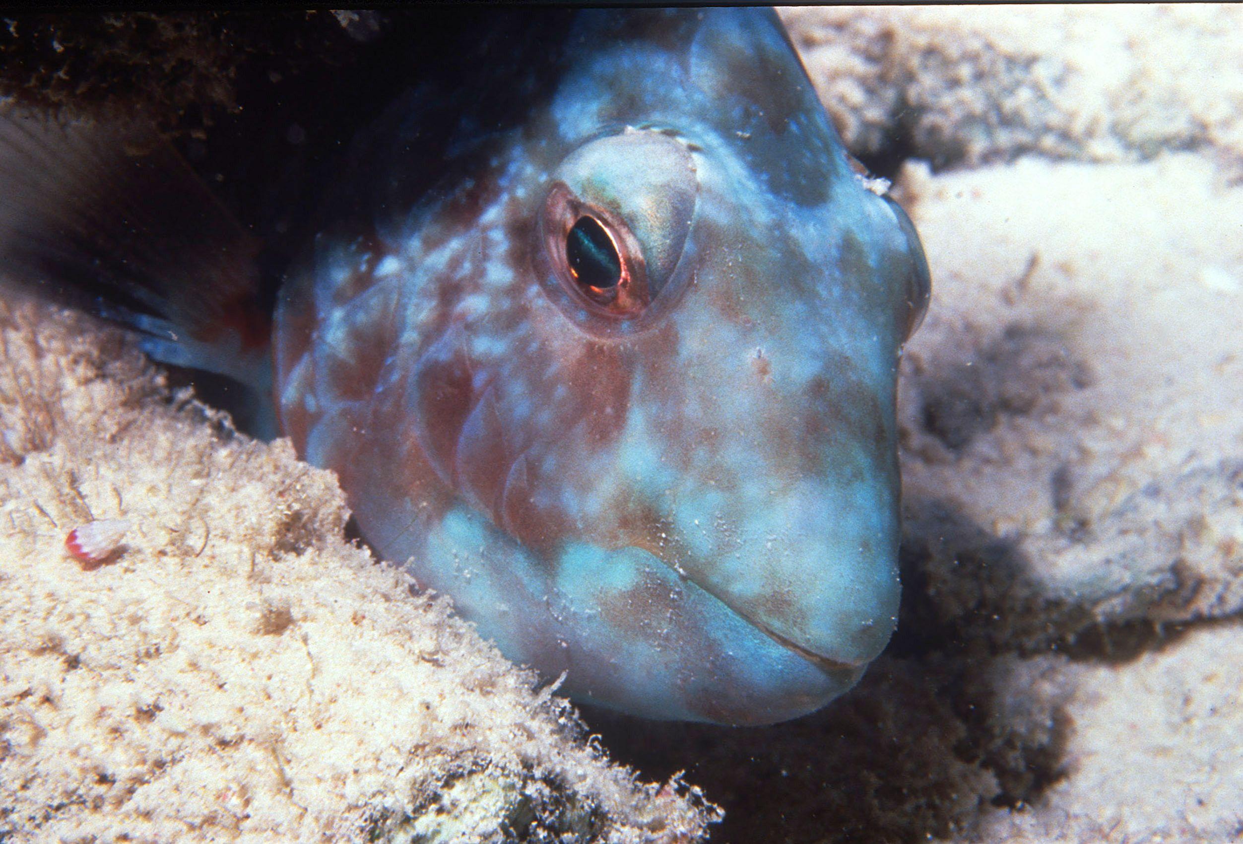 Marine Life 0032.jpg