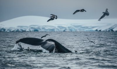 KT_150310_5Swims_AntarcticPeninsula_7014.jpg