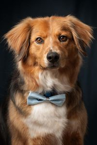 dog portraits modeling
