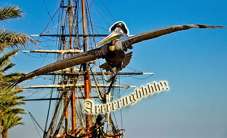 Pelican Pirate