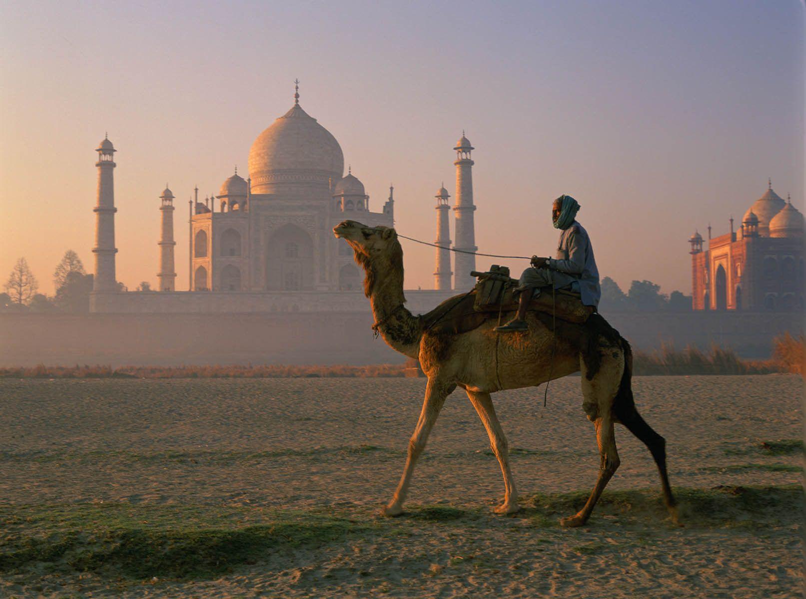 6_0_221_1india_camel_tajmahal_06.jpg