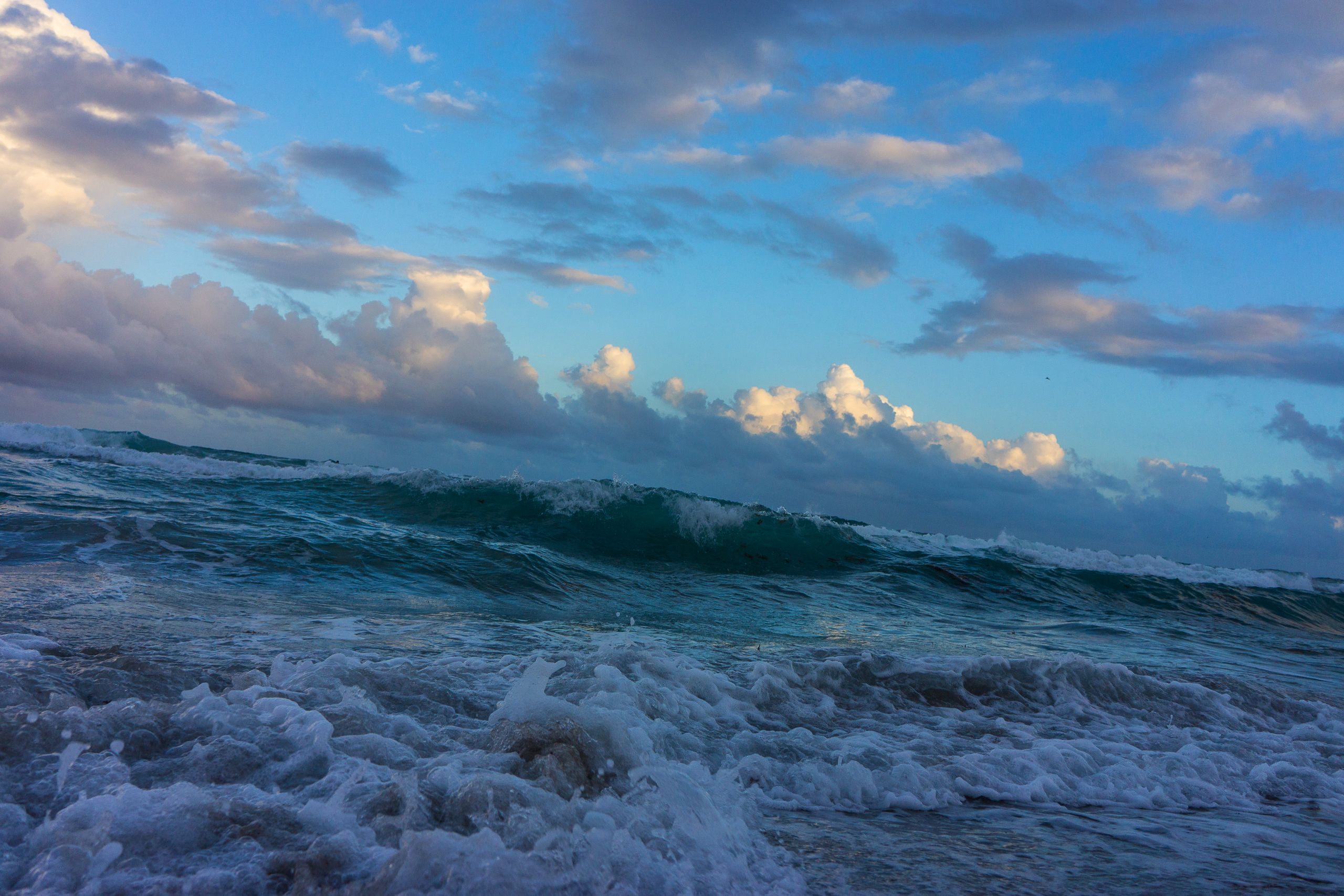 SEA SWELL 2