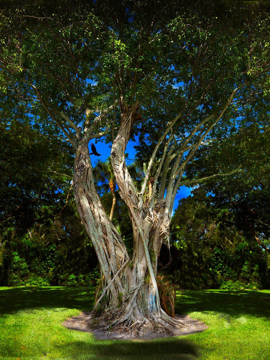 NESTING TREE 2