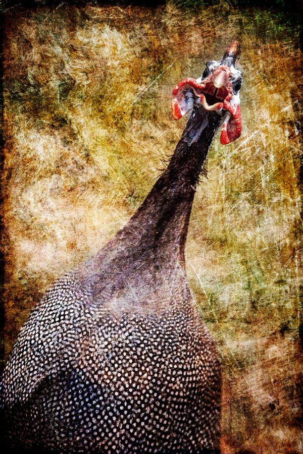 Turkeys_02172019_008.jpg