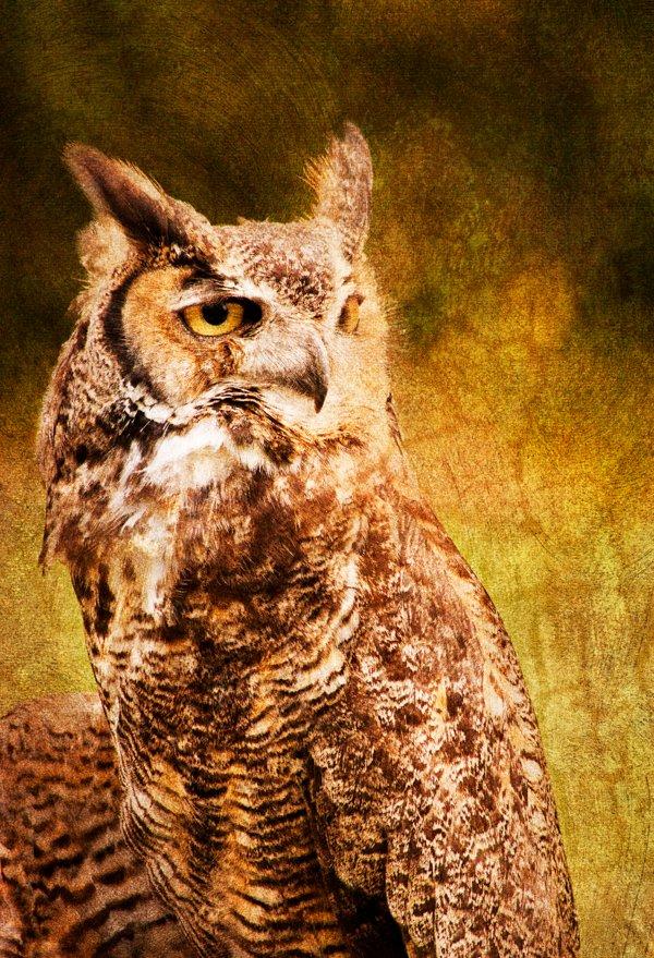 Woodland_Park_Zoo_04052011_305_2.jpg