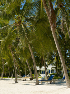 Coconut palm beach