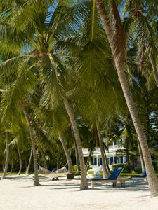 Coconut palm beach
