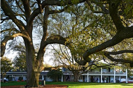 Big oak tree at Augusta National