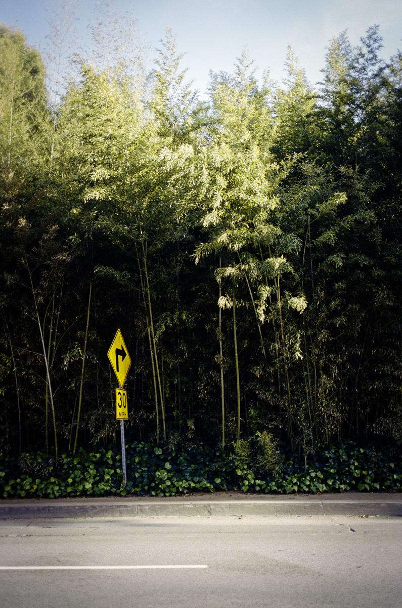 blurr_Trees_002.jpg