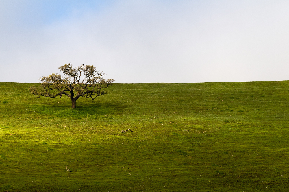 San_Lorenzo_Tree.jpg
