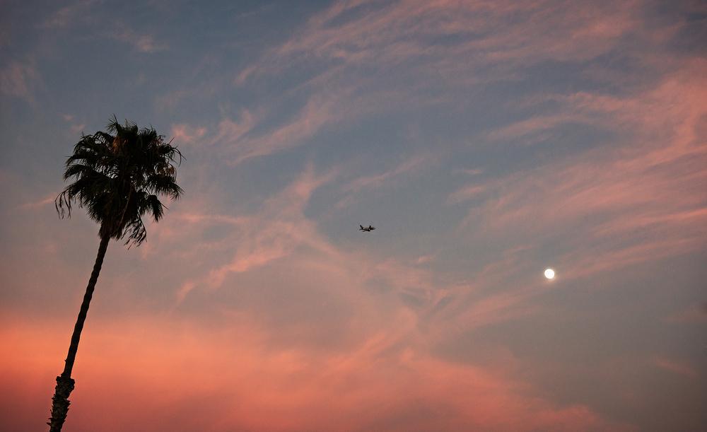 jeffreythayer_Sunset_Palm.jpg