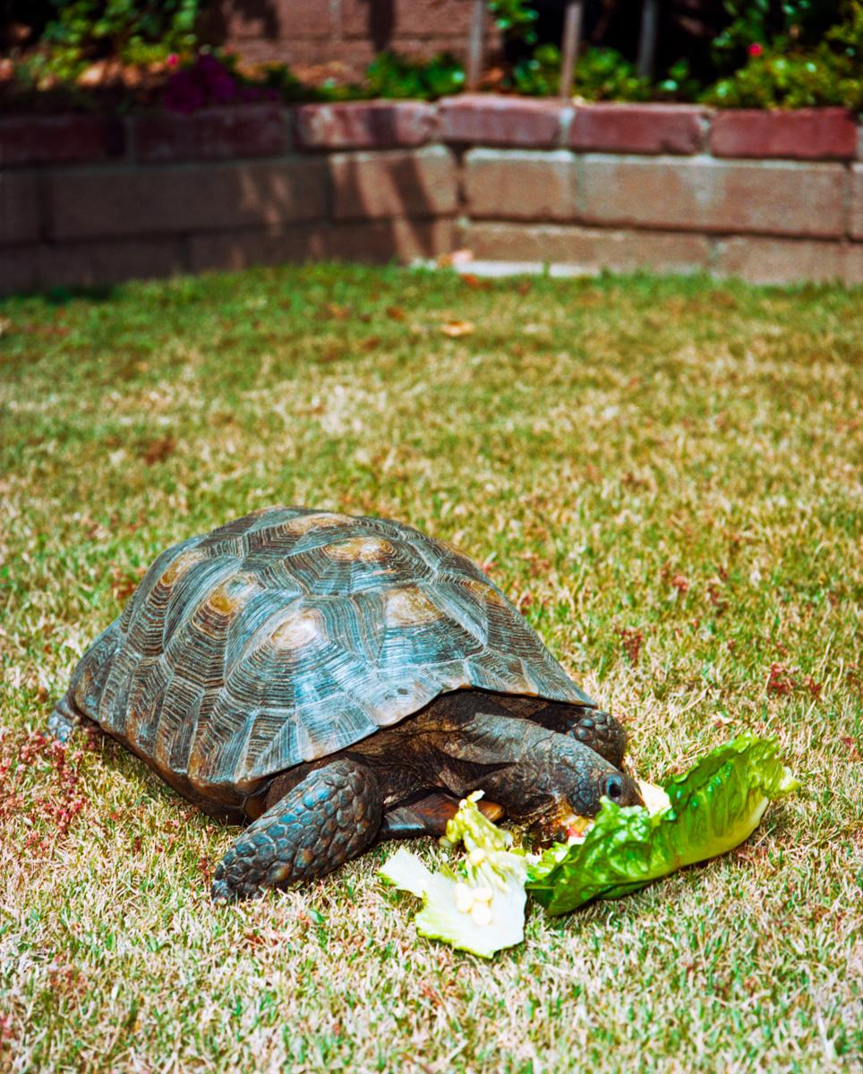 tortoise_XLrt.jpg