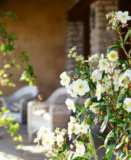Yvon Chouinard  Organic Style