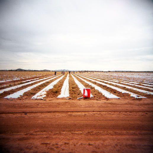 Migrant workers, AZ