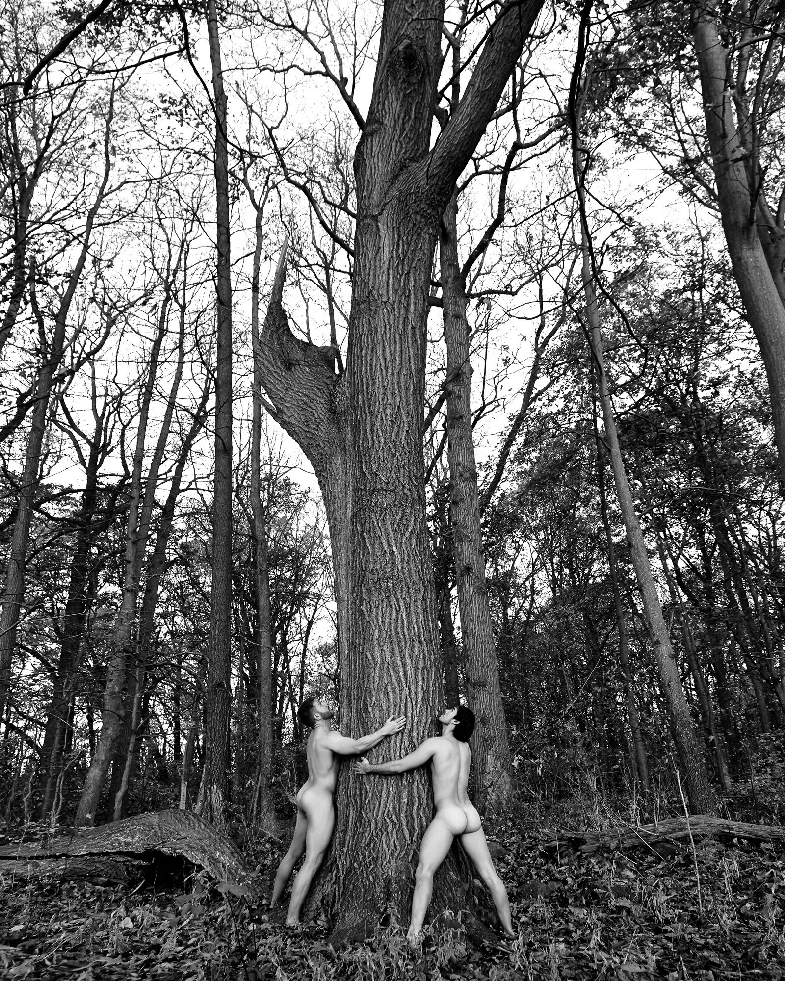 Trees_36.25x43.25.jpg