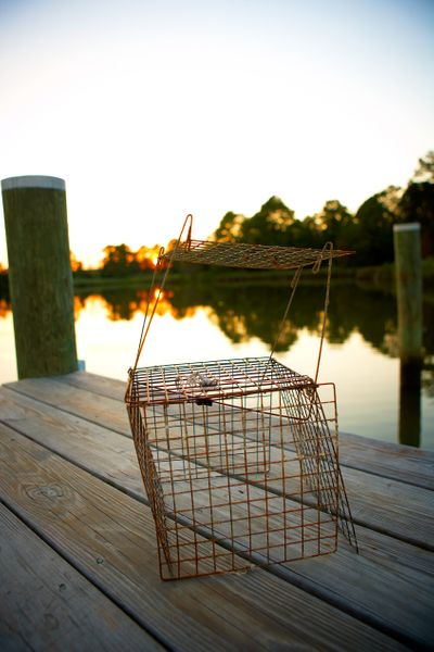 Empty-crab-trap-on-dock.jpg